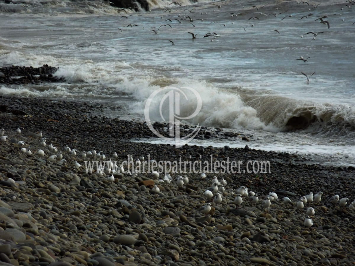 Amroth waves and birds