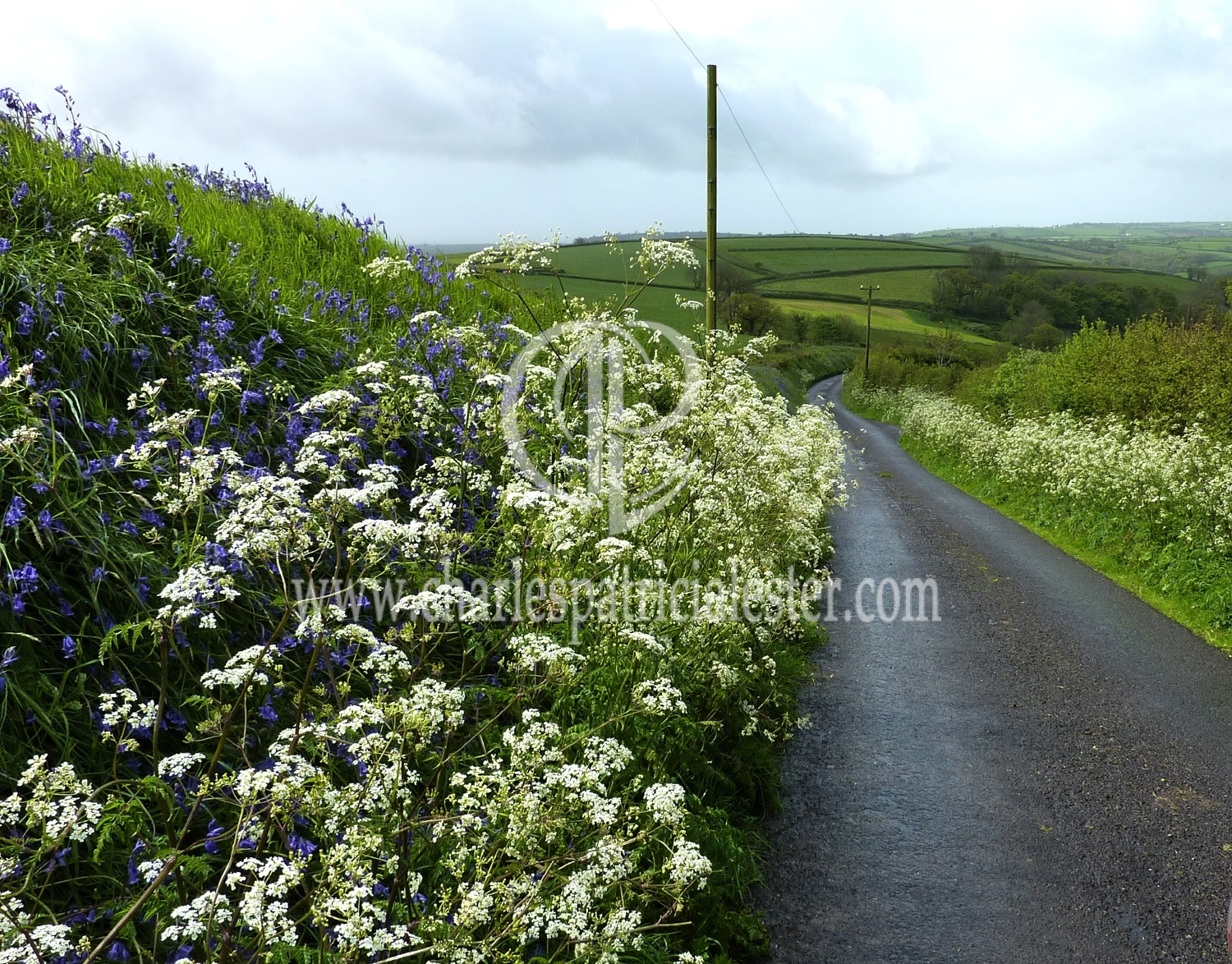 Flower filled lanes to inspire the giant of verse - Dylan Thomas