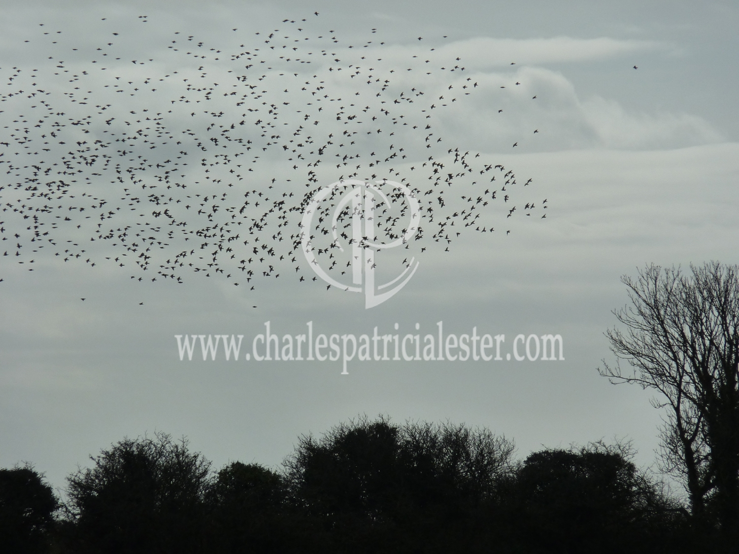 "starlings flying ""flight of birds towards the sun"" Dylan Thomas"