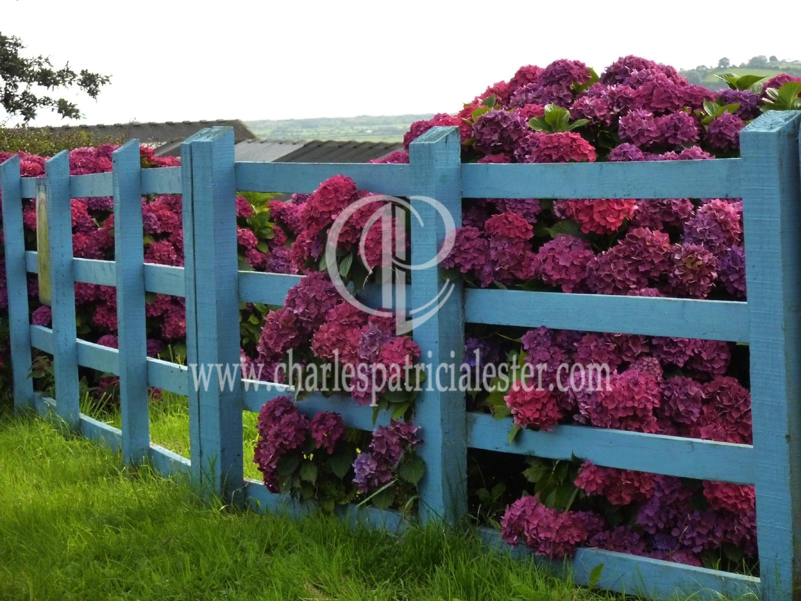 P1160248blue fence