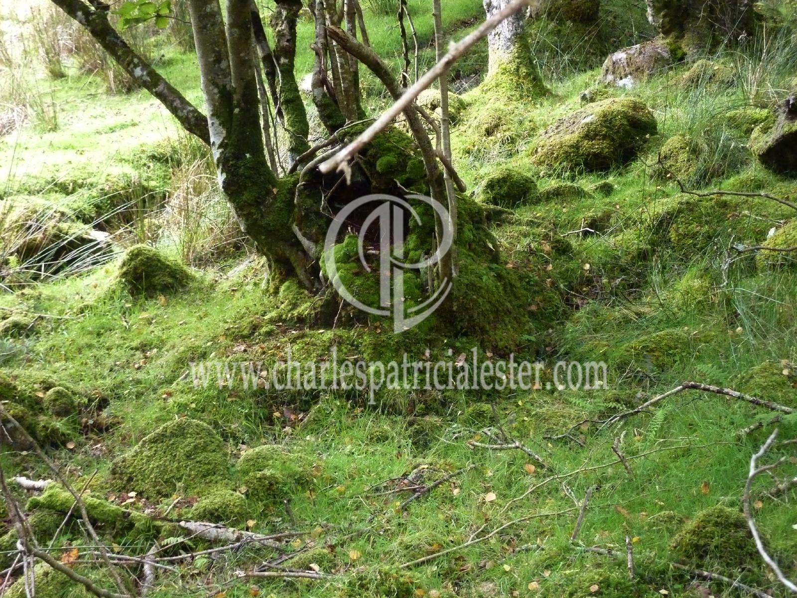 P1160733moss wood4