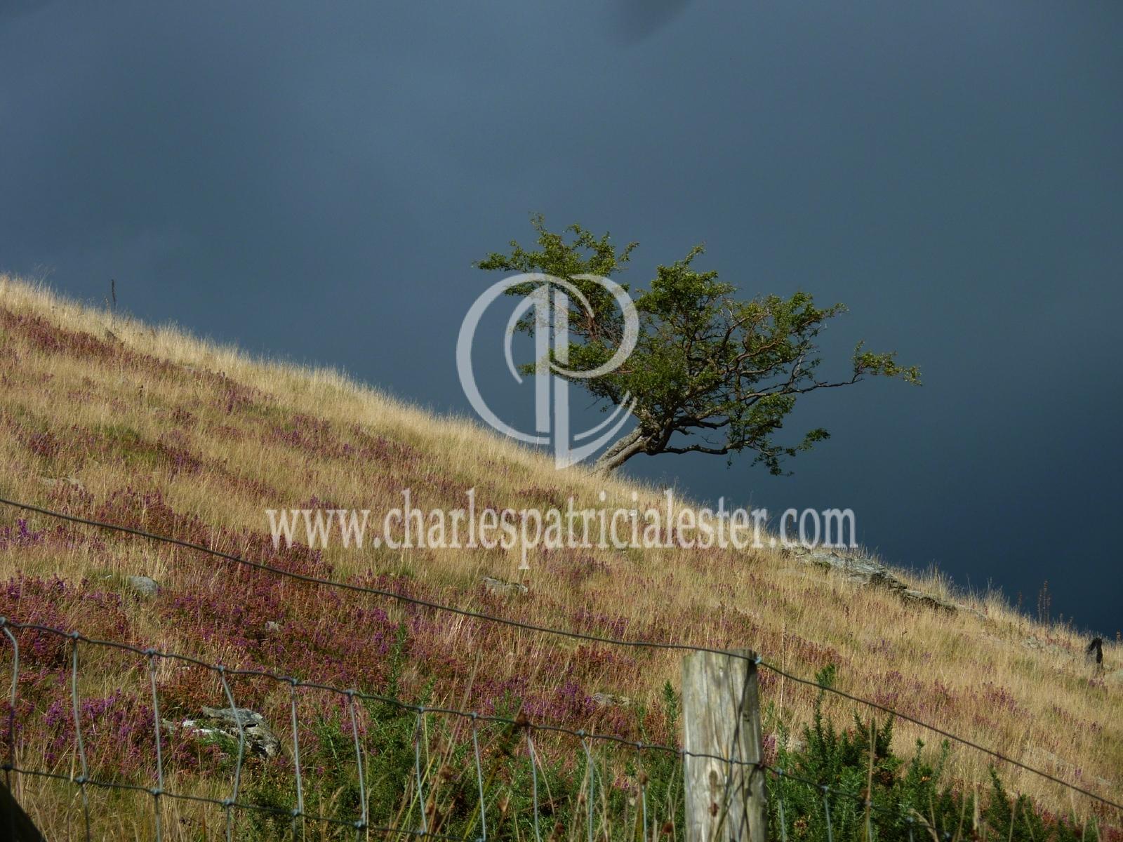 P1160770 tree dark horizon
