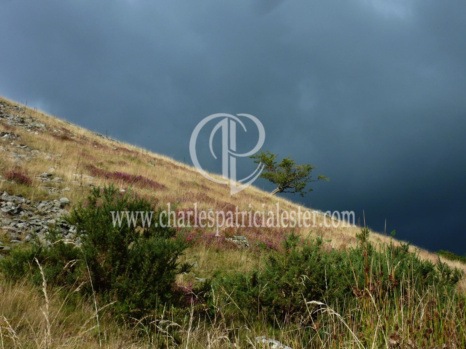 P1160772 tree dark sky